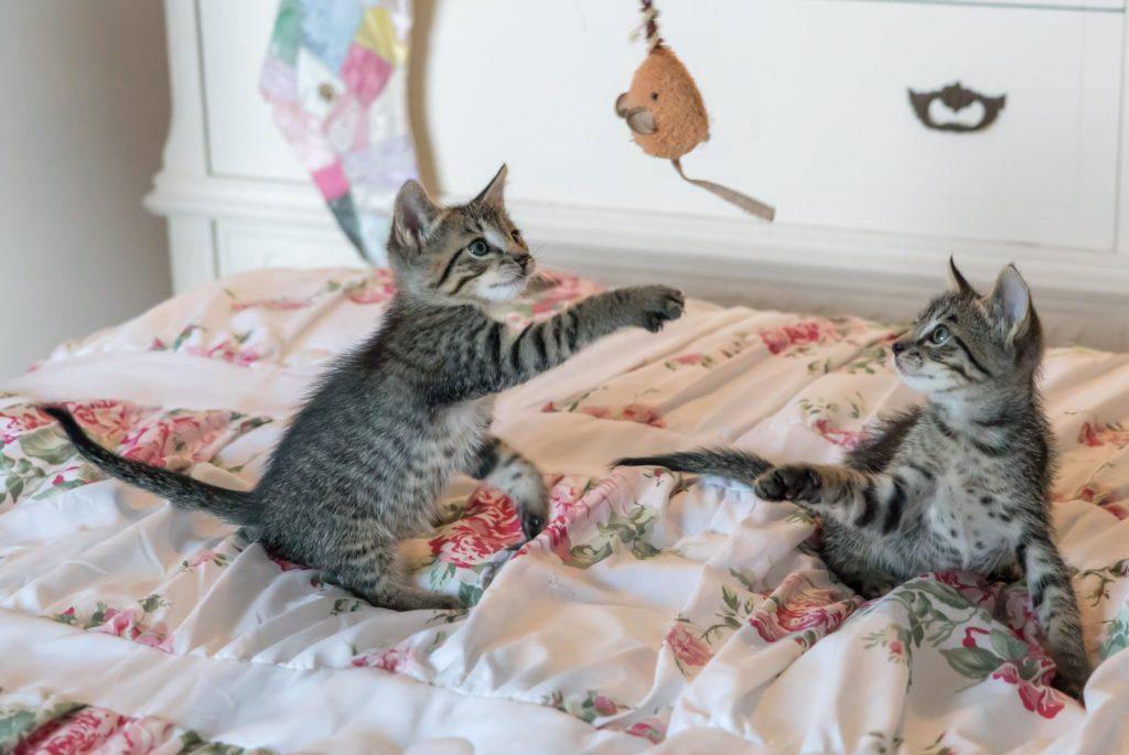 De leukste kattenspeeltjes voor jouw kat