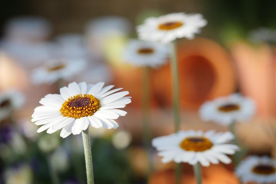 4 Tips om je tuin op de fleuren voor de zomer!