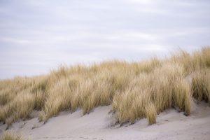 De mooiste natuurgebieden in Zeeland